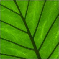 green_leaf_detail_197175